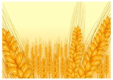 Free Ripe Ear Wheat Royalty Free Stock Images - 19373579