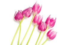 Free Bouquet Of Pink Tulips Royalty Free Stock Images - 19374359