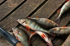 Free Freshwater Fish In The Boat Stock Images - 19374664