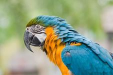 Free Macaw Stock Images - 19374674