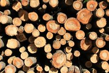 Free Wood Stock Images - 19374894