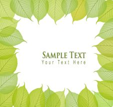 Border With Fresh And Green Leaves. Vector Stock Photo