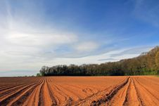 Free Ploughed Potato Field With Twin Vanishing Points Stock Photography - 19377552