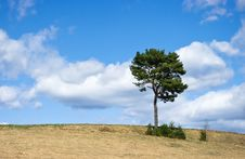 Free Lonely Tree Stock Images - 19377984
