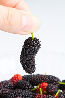 Mulberry In Hand 3 Royalty Free Stock Photos