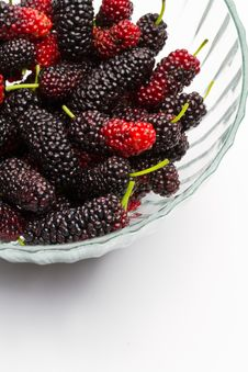 Free Mulberry Royalty Free Stock Photo - 19378235