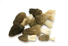 Free Morel On A White Background Royalty Free Stock Image - 19378666