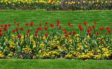 Free Red  Tulips Stock Photos - 19380153
