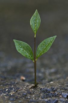 Plant Growning Out Of Cement Royalty Free Stock Photography