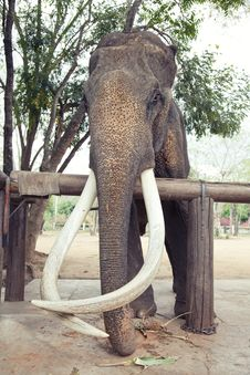 Free Elephant Stock Photos - 19386263