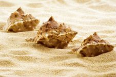 Free Sea Shells On The Beach Stock Photo - 19386370