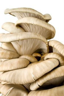 Free Mushrooms Stock Photo - 19386590