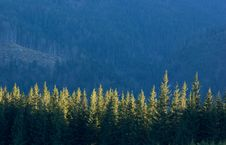 Free Trees In Mountains Royalty Free Stock Image - 19387216