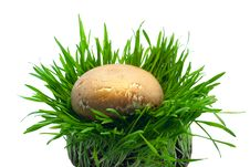 Free Mushroom In Grass Stock Photos - 19388433