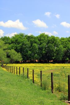 Pasture With Yellow Flowers And Fence Royalty Free Stock Photography