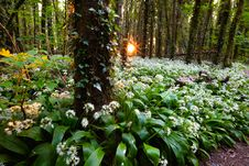 Free Rising Sun In Spring Forest Stock Photos - 19389073
