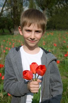 Boy With Bouquet Of Tulips Stock Photography