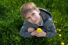 Boy With Dandelion Stock Image