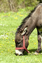 Free Donkey Grazing On The Field Royalty Free Stock Images - 19394069