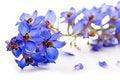 Free Blue Flower Royalty Free Stock Photo - 19396255