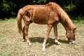 Free A Horse Grazes On Grass Stock Image - 19398641