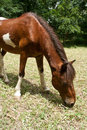 Free A Horse Grazes On Grass Stock Photos - 19398663