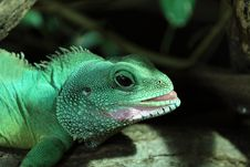 Free Chinese Water Dragon Stock Photos - 19391603