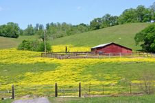 Buttercup Farm Stock Image