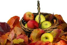 Free Ripe Apples In The Bright Autumn Foliage Stock Photography - 19394542