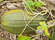 Free Pumpkin Patch Close Up Stock Photos - 19394903