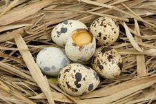 Free Broken Partridge Egg Royalty Free Stock Images - 19395589