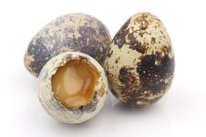 Free Isolated Broken Partridge Egg Stock Photography - 19395612