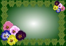 Free Pansy Flowers Background Stock Photography - 19397532