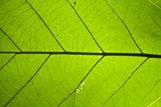 Free Leaf Texture Stock Photos - 19398703