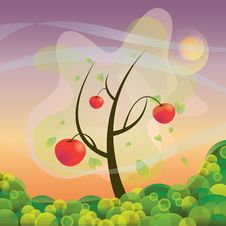 Free An Apple Tree Stock Image - 19399991