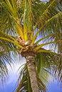 Free Palm Dreams Stock Photo - 1949180