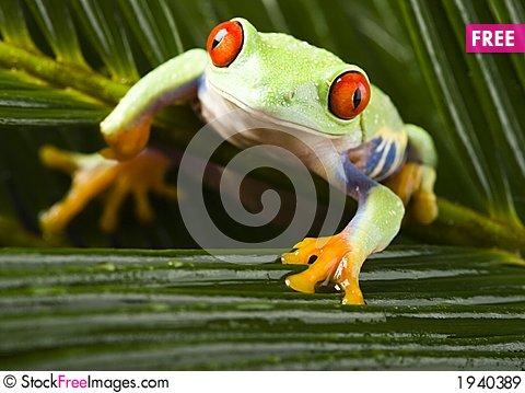 Free Frog Royalty Free Stock Images - 1940389