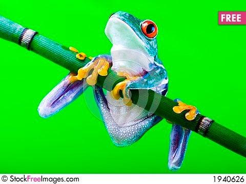 Free Frog Royalty Free Stock Image - 1940626