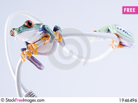 Free Frog Royalty Free Stock Image - 1946496