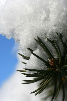 Free Spruce Branch With Snow Stock Photos - 1941023