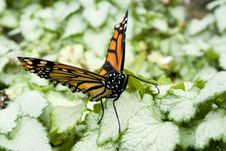 Free Butterfly Royalty Free Stock Image - 1941146