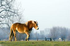 Free Horse Stock Photo - 1942640