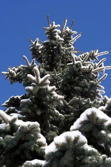 Free Winter Beautiful Tree Stock Photos - 1942903