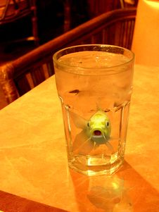 Free Fish In A Glass Of Water Stock Images - 1943234