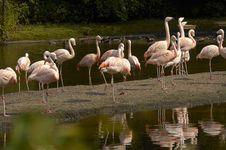 Free Flamingos At Sunset Stock Photos - 1944723