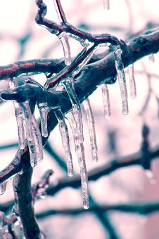 Free Icicles Over Branches Stock Photos - 1945563