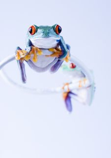 Free Frogs Royalty Free Stock Photography - 1946417