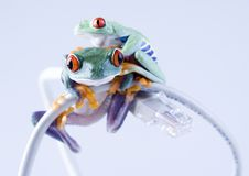 Free Web Frog Stock Photography - 1946482