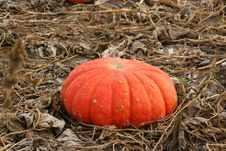 Free Cinderella Pumpkin Royalty Free Stock Images - 1947779