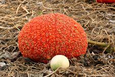 Free Pumpkin & Gourd Stock Image - 1947831